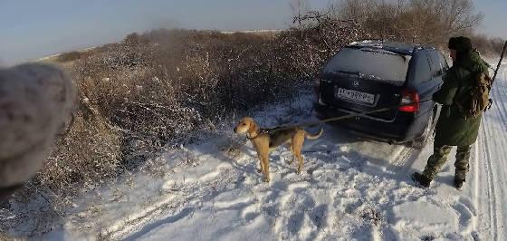 Закрытия охоты на зайца с русскими гончими