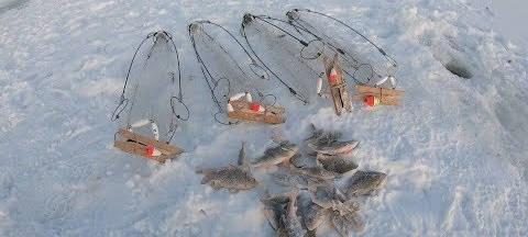 Рыбалка на сазана зимой с хапугами