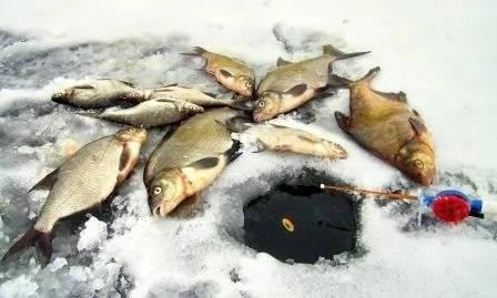 Ловля леща на Белгородском водохранилище
