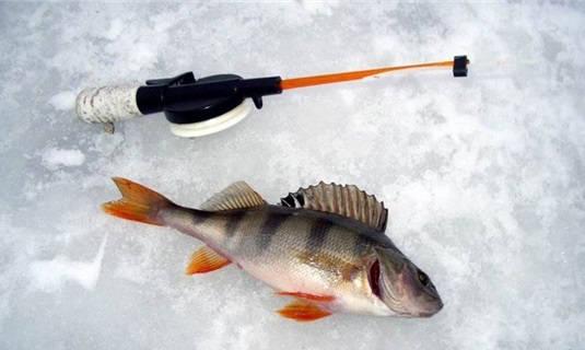 Ловля окуня со льда в феврале