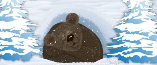 Выходят ли медведи зимой из берлоги