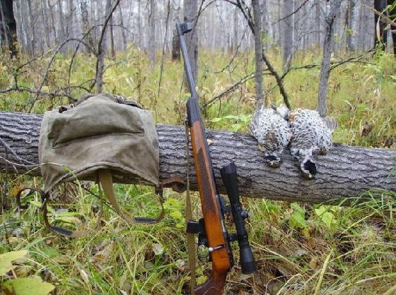 Какую мелкашку выбрать для охоты?
