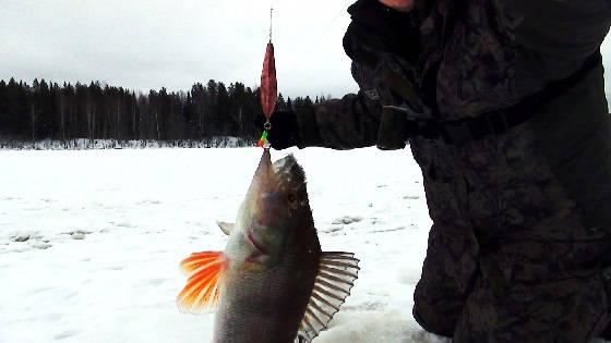 Рыбалка в Республике Коми на блесну