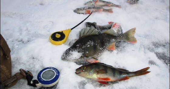 Рыбалка на Истре на безмотылку