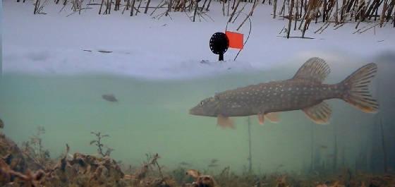 Рыбалка на Жерлицы с Подводными камерами