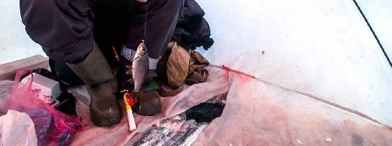 Зимняя рыбалка с комфортом на Ладожском озере