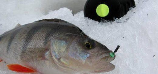 Зимняя ловля окуня на мормышку
