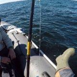 Ловля трески на Баренцевом море
