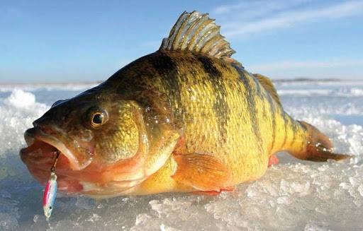 Рыбалка в феврале