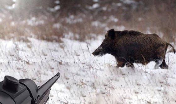 Загонная охота на кабана зимой