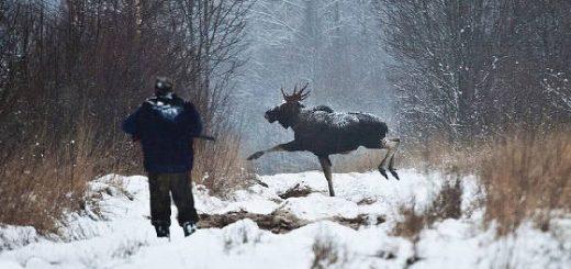 Уничтожение зверя в нацпарке МЕЩЁРСКИЙ госохотинспекторами