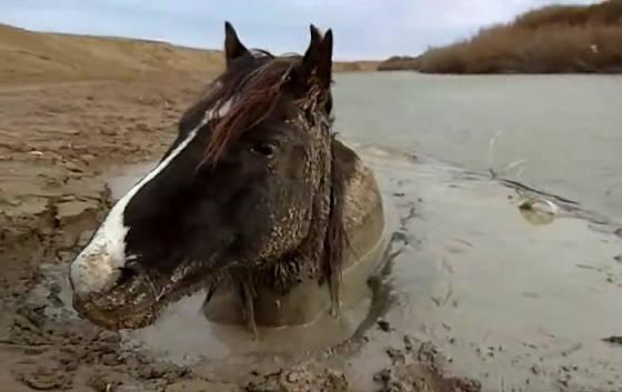 Спасение Лошади из ПУЧИНЫ