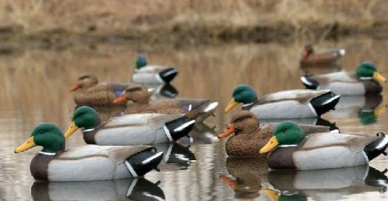 Как не покупать лишнего для охоты на уток и гусей