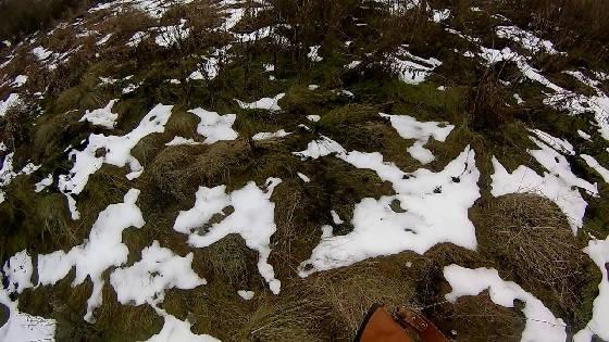охота на зайца: Тройка или Единица