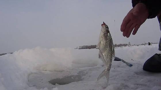Ловля белой рыбы на большой глубине