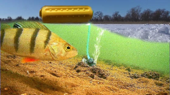 Реакция рыбы на Фарш из Мойвы