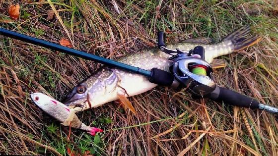 поймать щуку на спиннинг осенью на малой реке