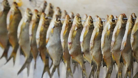 Вяленая рыба: полный процесс