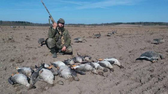 открытие охоты на гуся в Беларуси