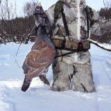 Зимняя охота в Себяне в - 50°