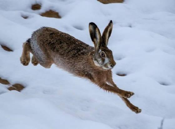 Охота на зайцев: Закрытие сезона 2020-2021
