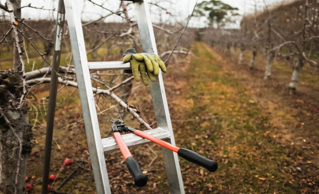 услуги по обрезке плодовых деревьев