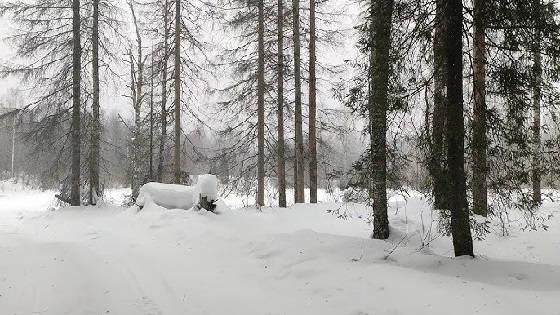Поход в тайгу на камусных лыжах