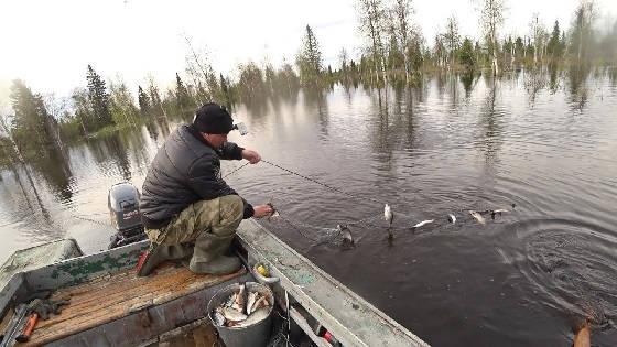 Проверка забитых рыбой сетей