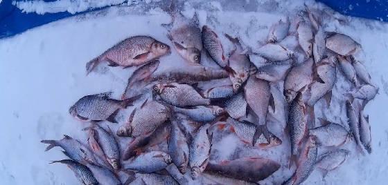 Зимняя рыбалка на Яузском вдхр