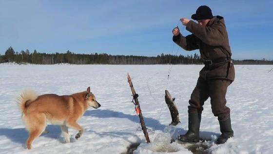 Ловля щуки на карельском озере со льда