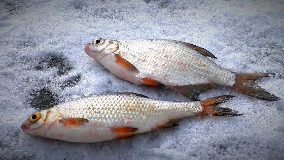 Рыбалка для души на окуня