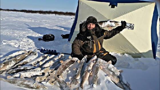 рыбалка в ТУНДРЕ на МНОГОРАЗОВЫХ ЖИВЦОВ