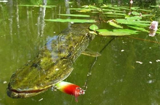 Как ловить на мелководье?