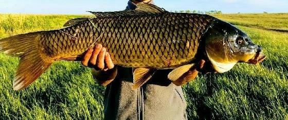 Рыбалка на поплавок ЁКЛМН