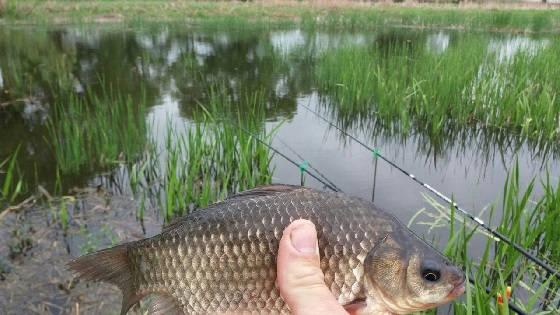 Рыбалка на карася (ПОПЛАВОК)