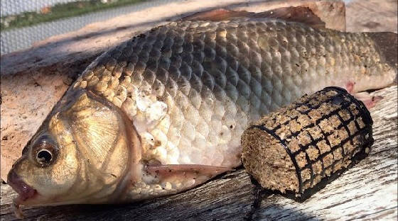 Фидерная рыбалка на карася