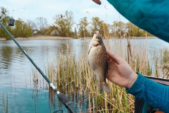 Карась на фидер: Активная рыбалка