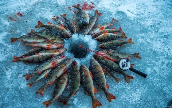 Эффективное и долгоиграющее приваживание рыбы