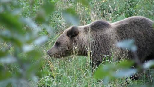 Подготовка к охоте на медведя