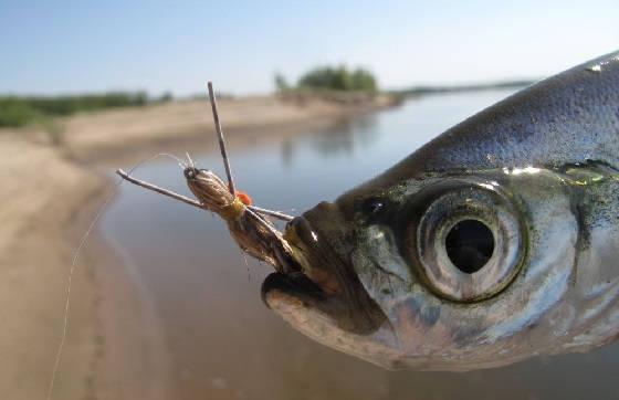 Ловля рыбы на тараканов
