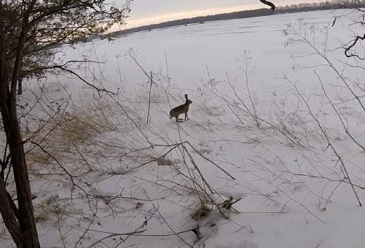 Охота на ушастого в бескрайних полях