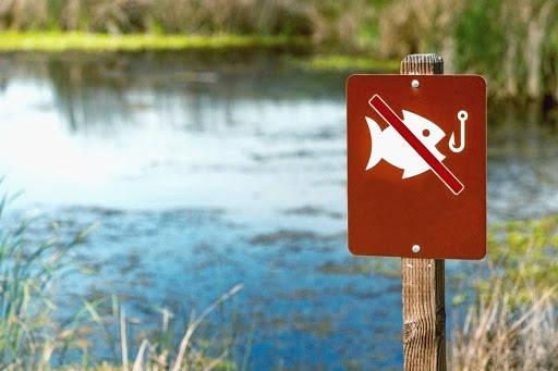 Как рыбачить в нерестовый запрет?