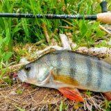 Спиннинг CRAZY FISH ARION