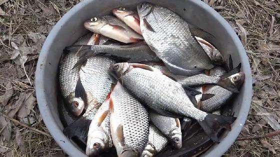 Сухой Посол Рыбы в Ведре