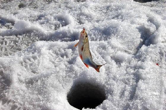 Весенняя рыбалка со льда