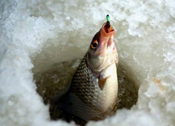 Ловля плотвы со льда на безмотылку