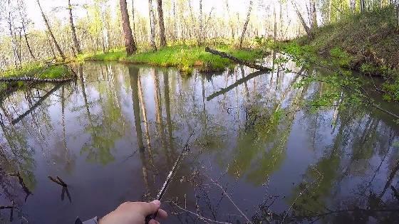 Весенние приключения на лесной речке
