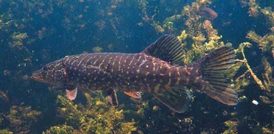 Рыбалка в сердце Астрахани
