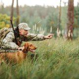 Правила охоты с собакой