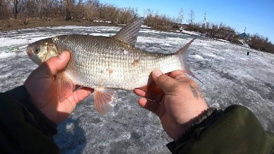 Рыбалка Хлопком
